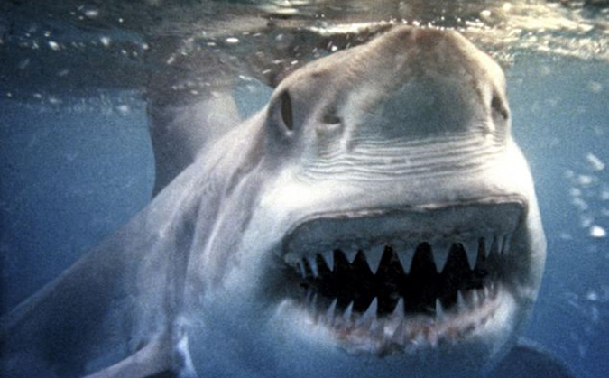 One of the many famous photos of great white sharks taken by Ron and Valerie Taylor, used as research for building Bruce the shark for the making of JAWS.